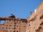 Ancient Wall with Nesting Storks - Morocco