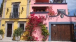 Yellow and Pink Walls with Bougainvillaea - San Miguel De Allende, Mexico