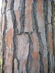 Tree Bark. Vancouver, Canada