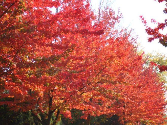 canadian_fall_by_clinock