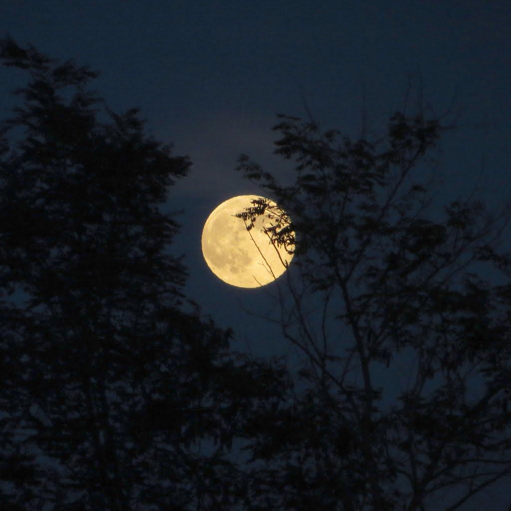 summer moon 1